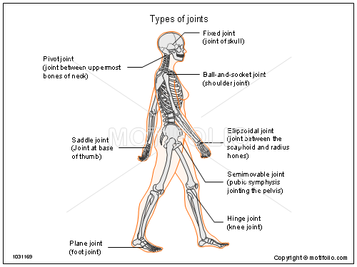 Types of joints PPT PowerPoint drawing diagrams, templates, images ...