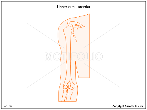 Upper arm - anterior, PPT PowerPoint drawing diagrams, templates, images, slides