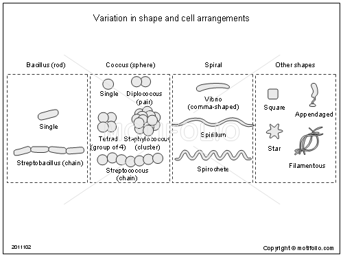 Variation in shape and cell arrangements, PPT PowerPoint drawing diagrams, templates, images, slides