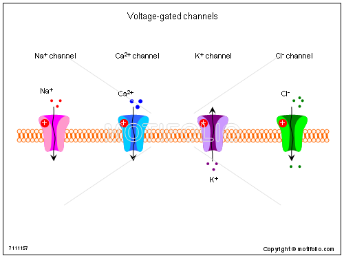 Voltage-gated