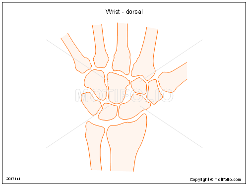 Wrist - dorsal, PPT PowerPoint drawing diagrams, templates, images, slides