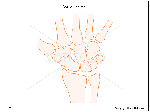 Wrist - palmar, PPT PowerPoint drawing diagrams, templates, images, slides