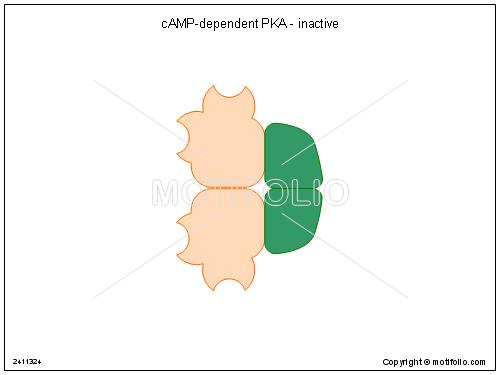 cAMP-dependent